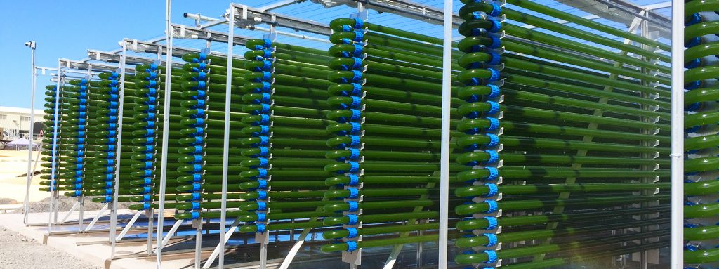 Phyco-Flow installation